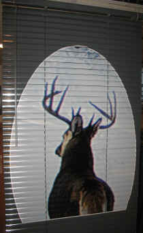 Customized Mini Blinds Vertical Blinds Sports Logos Applied